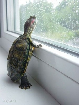 Turtle watching raindrops